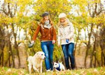 Почему полезно гулять с собакой?