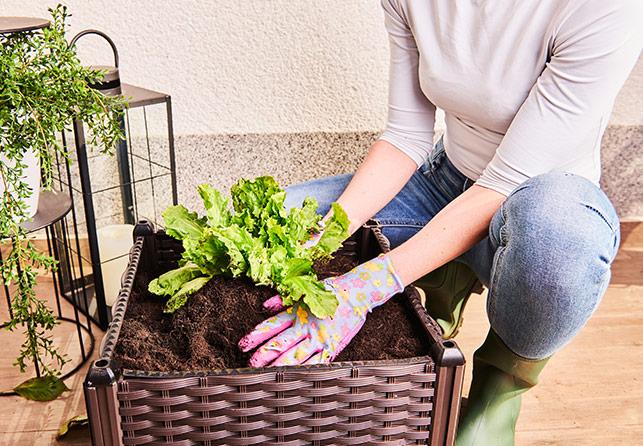Грядка для растений